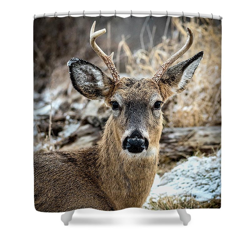 Snowflakes Shower Curtain featuring the photograph Made It Through Hunting Season by Joann Long