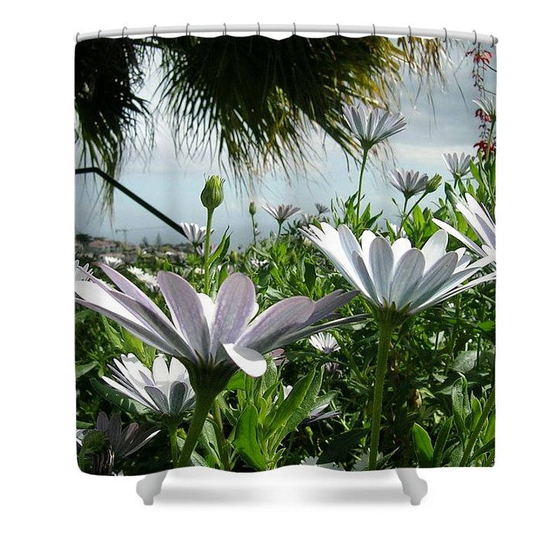 Landscape Shower Curtain featuring the photograph Madeira Daisies by Valerie Ornstein