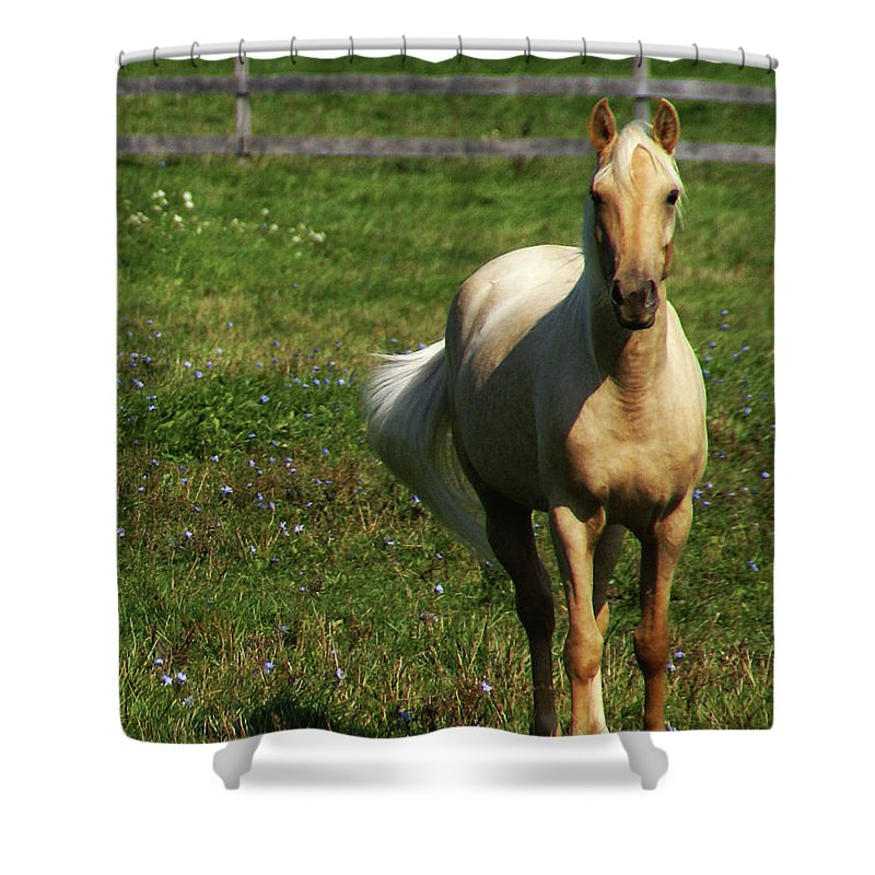 Horse Shower Curtain featuring the photograph Maggie - Michigans Morning Breeze by Linda Shafer
