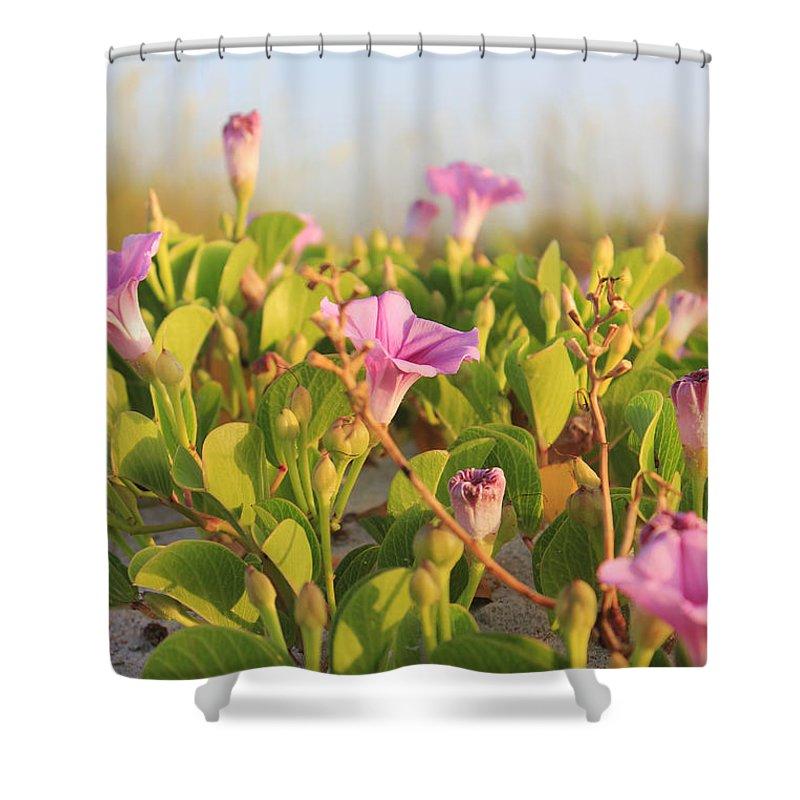 St. Augustine Shower Curtain featuring the photograph Magic Garden by LeeAnn Kendall