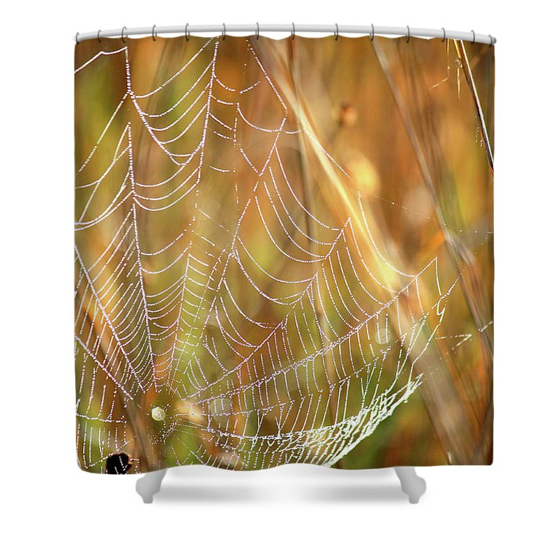 Marsh Shower Curtain featuring the photograph Magic In The Marsh by Carol Groenen