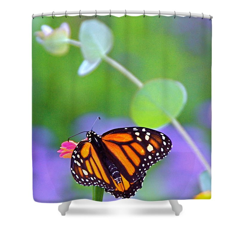 Magical Shower Curtain featuring the photograph Magical Monarch by Byron Varvarigos