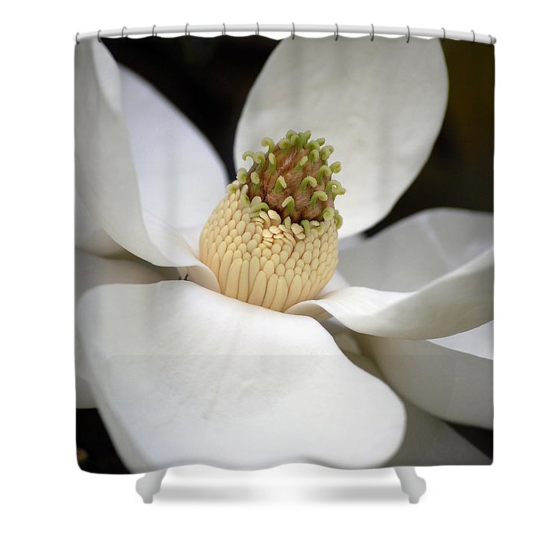 Flowers Shower Curtain featuring the photograph Magnolia 2 by Robert Meanor