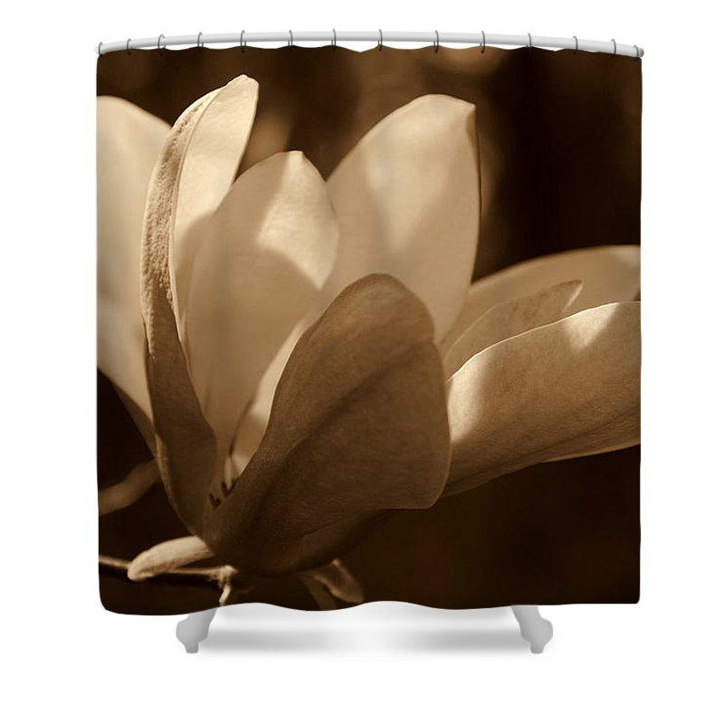 Magnolia Shower Curtain featuring the photograph Magnolia Blossom Bw by Susanne Van Hulst