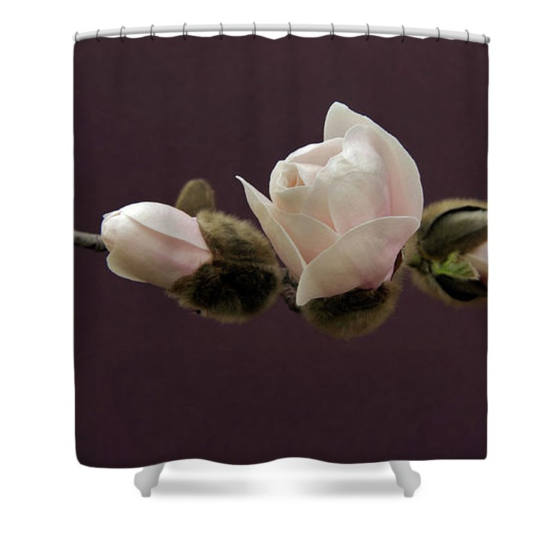 Background Shower Curtain featuring the photograph Magnolia Blossoms by Michael Peychich