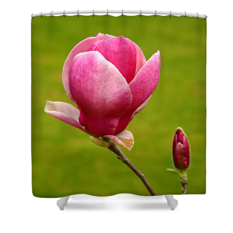 Bud Shower Curtain featuring the photograph Magnolia Closeup by Gaspar Avila
