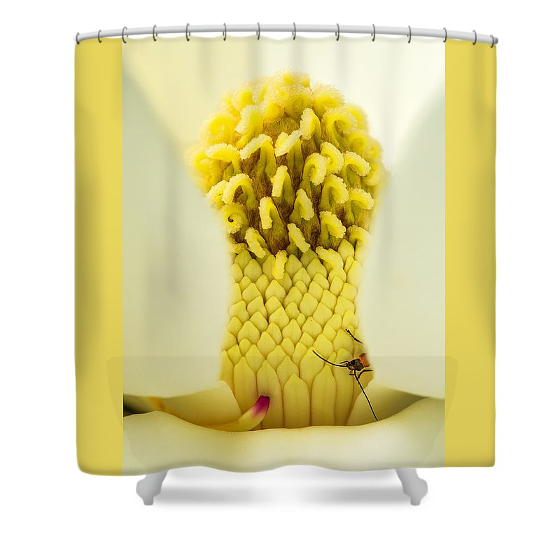 Fine Art Shower Curtain featuring the photograph Magnolia Flower With Company by Darby Donaho