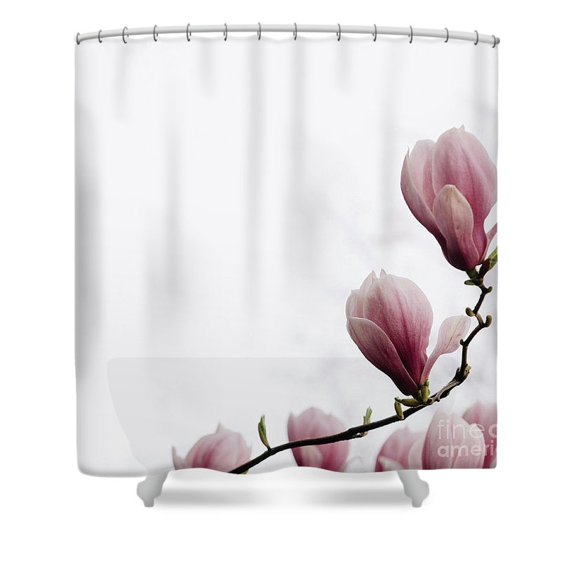 Magnolia Flower Shower Curtain For Sale By Jelena Jovanovic