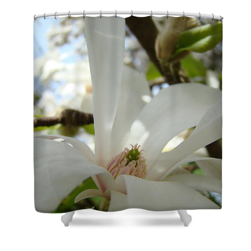 Magnolia Shower Curtain featuring the photograph Magnolia Flowers White Magnolia Tree Flower Art Spring Baslee Troutman by Baslee Troutman