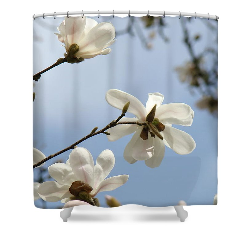 Magnolia Shower Curtain Featuring The Photograph Flowers White Tree Spring Artwork Blue Sky