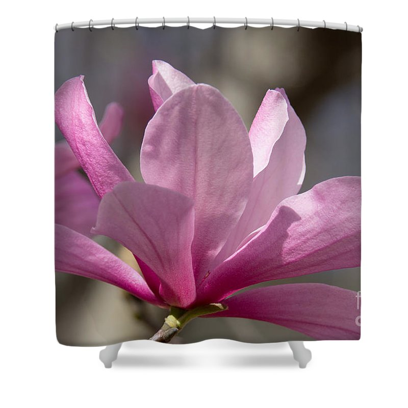 Magnolia Shower Curtain featuring the photograph Magnolia Galaxy 7044 by Terri Winkler