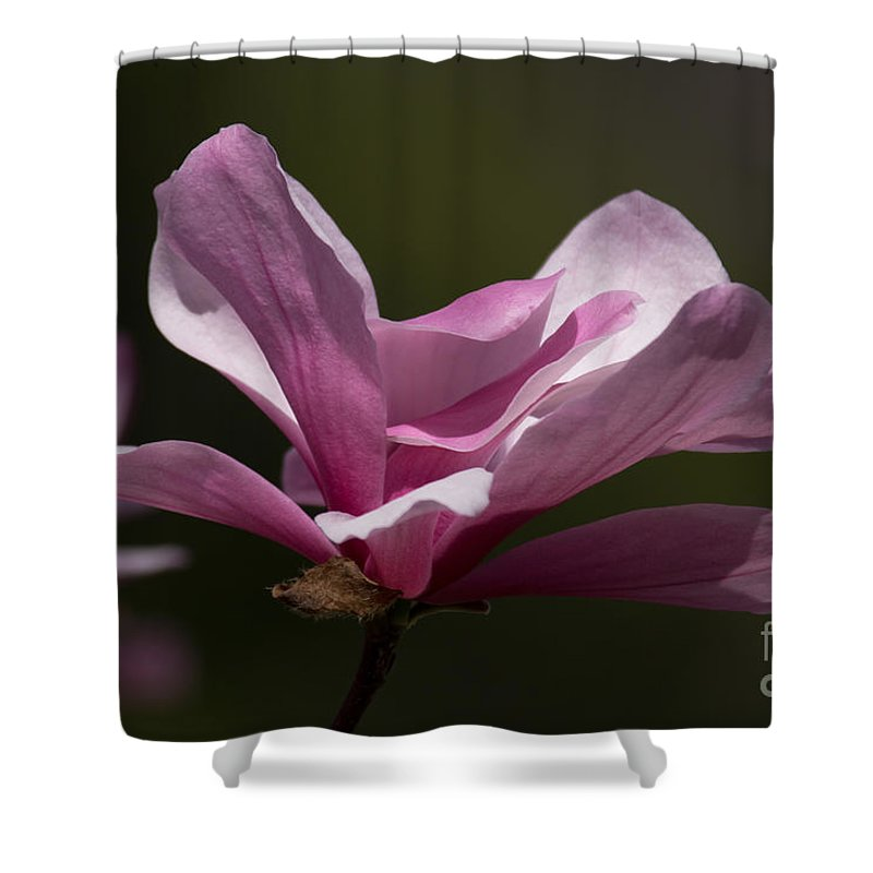 Spring Shower Curtain featuring the photograph Magnolia Galaxy by Terri Winkler