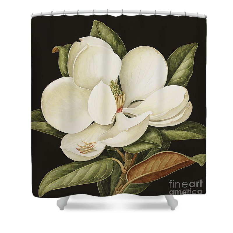 Still-life Shower Curtain featuring the painting Magnolia Grandiflora by Jenny Barron