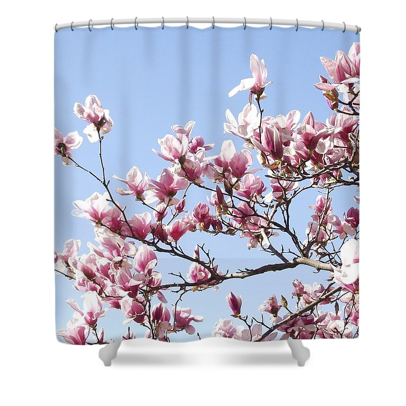 Magnolia Shower Curtain featuring the photograph Magnolia Tree Against Blue Sky by Carol Sweetwood