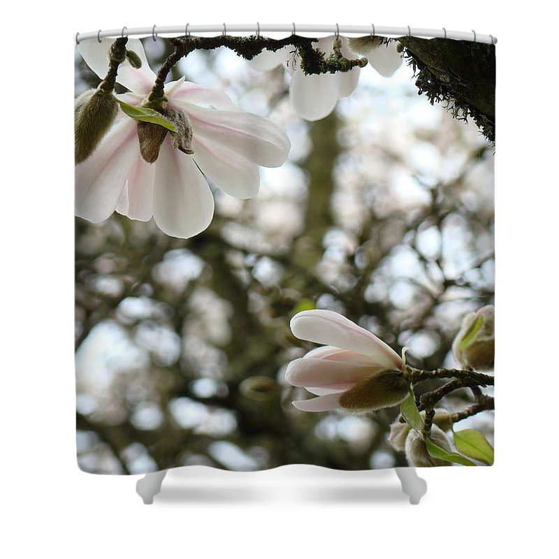 Magnolia Shower Curtain featuring the photograph Magnolia Tree Flowers Pink White Magnolia Flowers Spring Artwork by Baslee Troutman