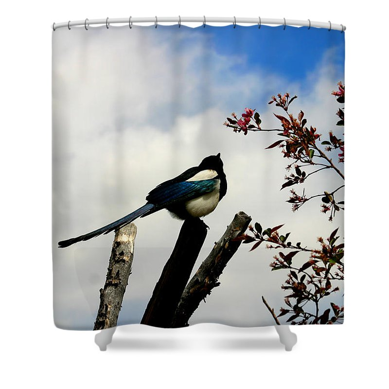 Magpie Shower Curtain featuring the photograph Magpie by Anthony Jones