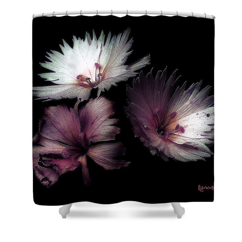 Dianthus Shower Curtain featuring the painting Maiden Mother Crone by RC deWinter