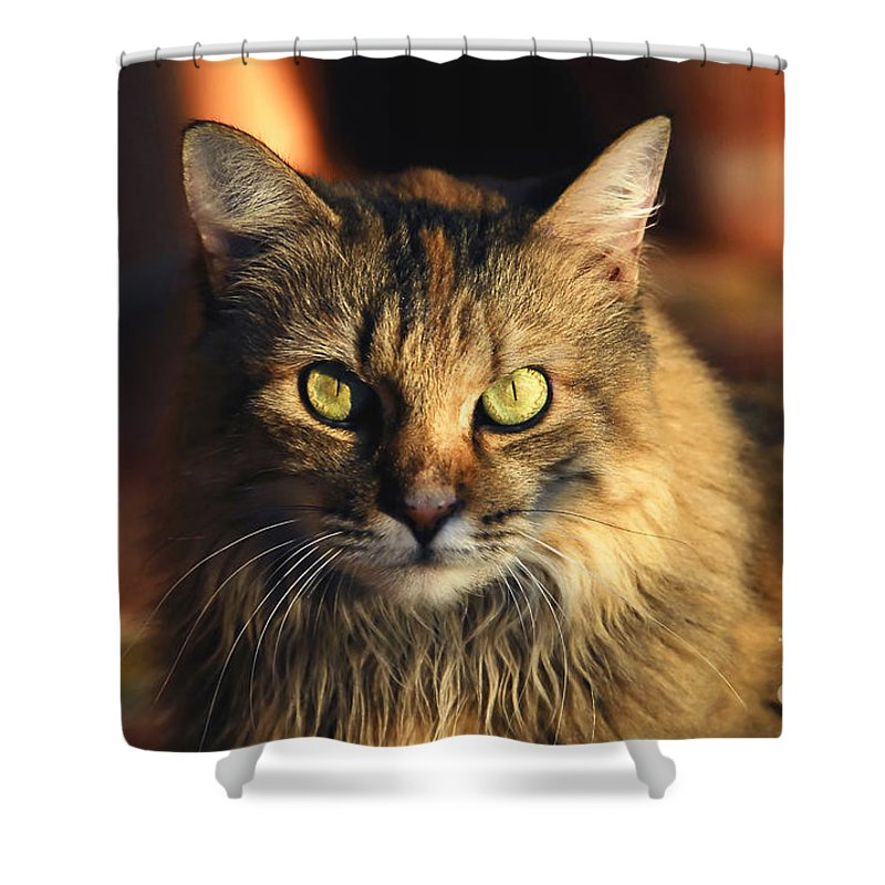 Main Coone Shower Curtain featuring the photograph Main Coone by David Lee Thompson