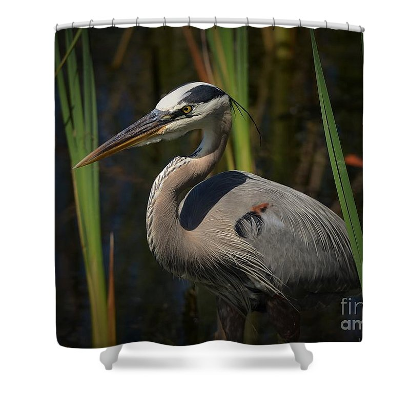 Heron Shower Curtain featuring the photograph Majestic Bird by Pamela Blizzard