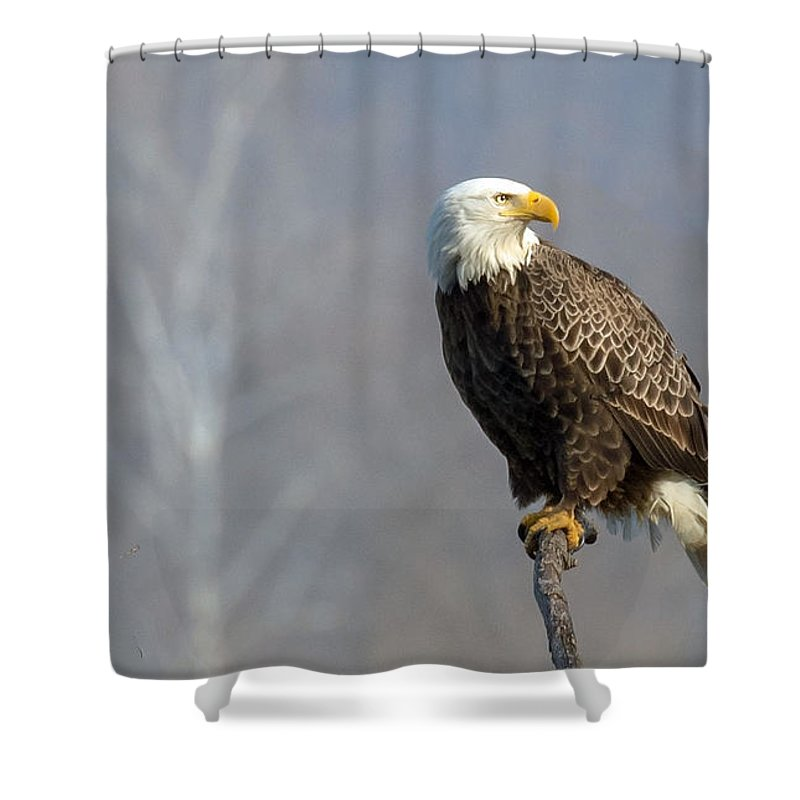 American Bald Eagle Shower Curtain featuring the photograph Majestic Morning by Rob Hawker