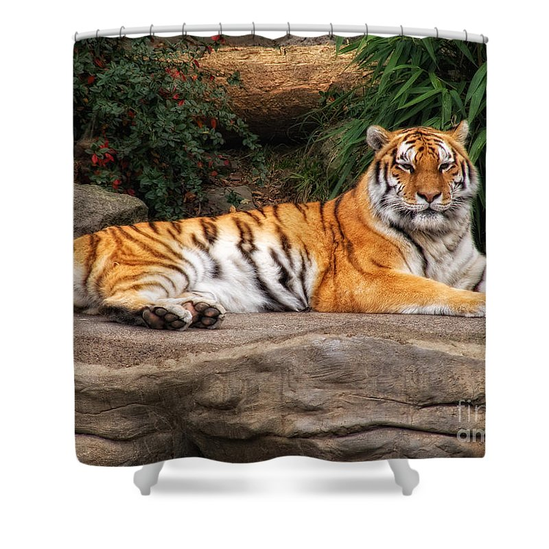 Tiger Shower Curtain featuring the photograph Majestic by Shari Nees