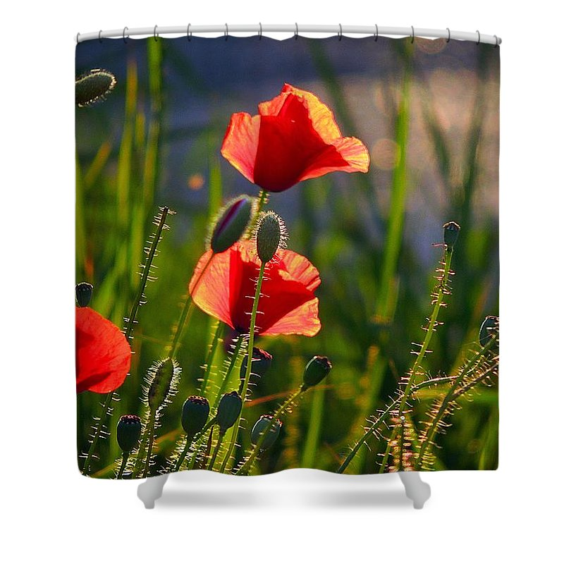 Poppies Shower Curtain featuring the photograph Maki by Bublikov Yury