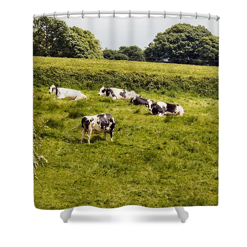 Field - Trees - Cows - Grass Shower Curtain featuring the photograph Making Milk by Chris Horsnell