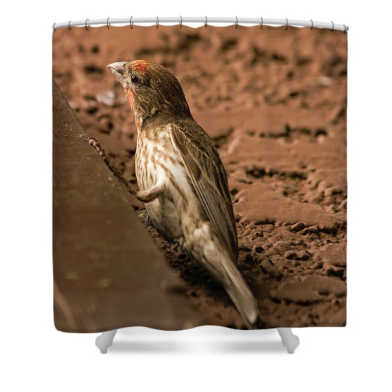 Myhaver Photography Shower Curtain featuring the photograph Male House Finch V10 by Mark Myhaver