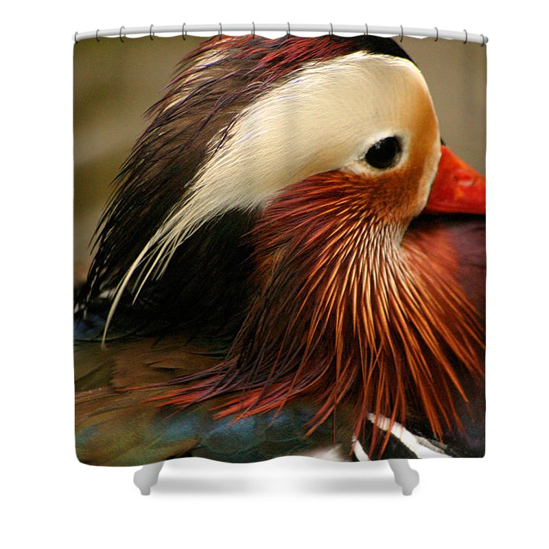 Mandarin Duck Shower Curtain featuring the photograph Male Mandarin Duck China by Ralph A Ledergerber-Photography