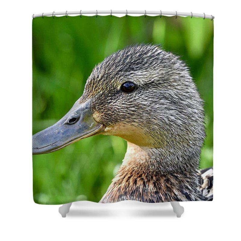 Anas Platyrhynchos Shower Curtain featuring the photograph Mallard Duck Female by Jeramey Lende