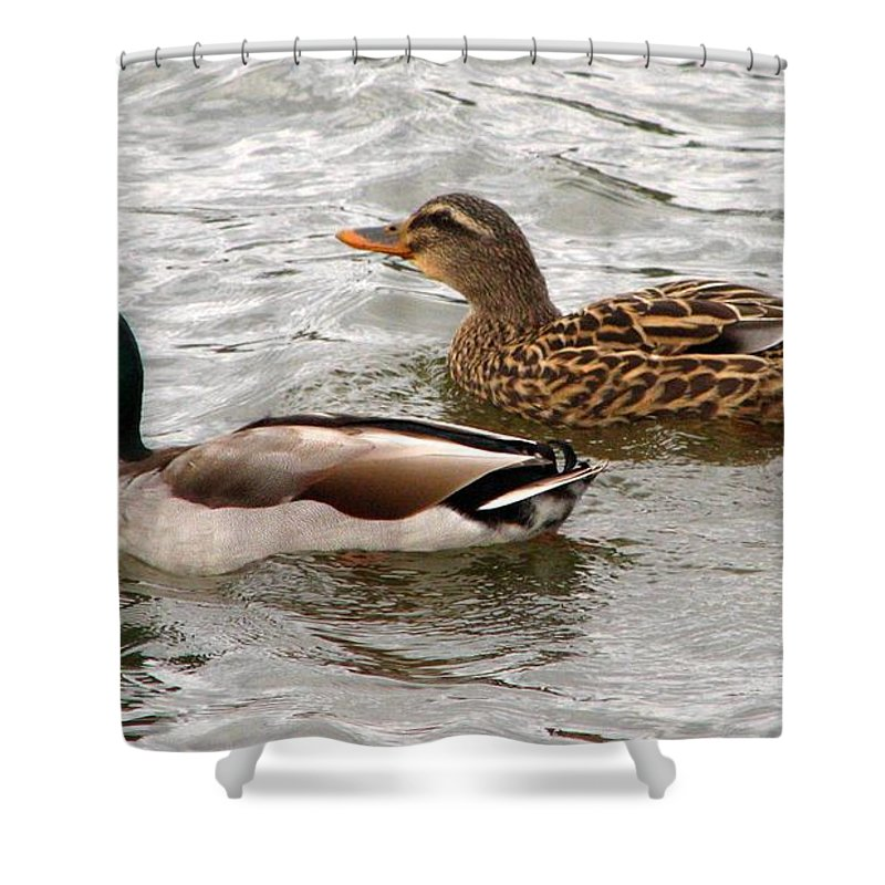 Duck Shower Curtain featuring the photograph Mallard Duo by J M Farris Photography
