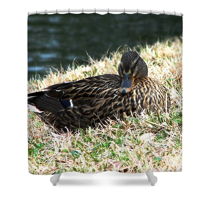 Duck Shower Curtain featuring the photograph Mallard Female 1 by J M Farris Photography