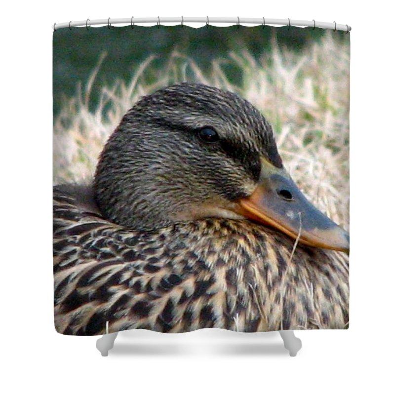 Duck Shower Curtain featuring the photograph Mallard Female 2 by J M Farris Photography