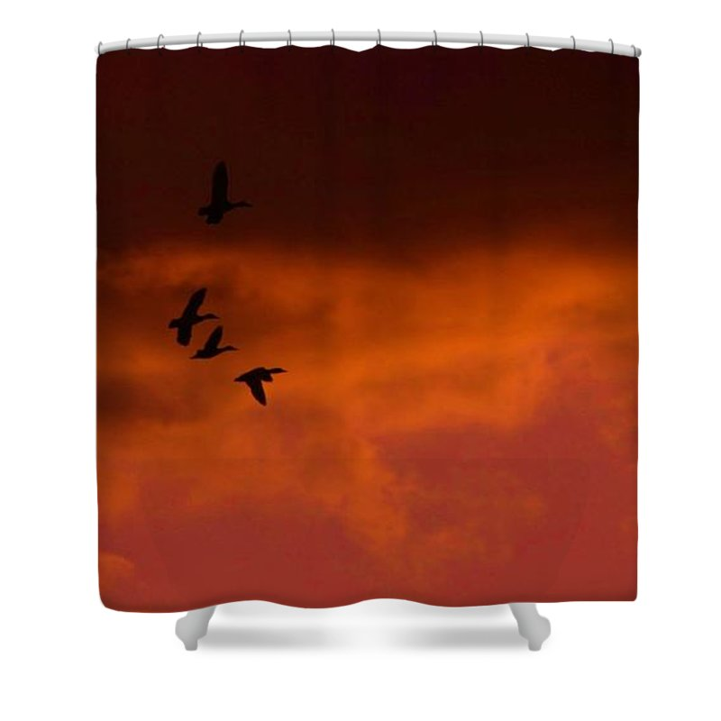Sunset Shower Curtain featuring the photograph Mallards At Sunset by Eric Noa