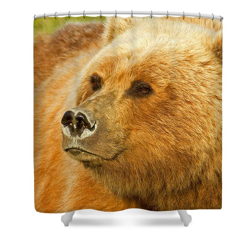 Grizzly Shower Curtain featuring the photograph Mama Bear Close Up by Shari Sommerfeld