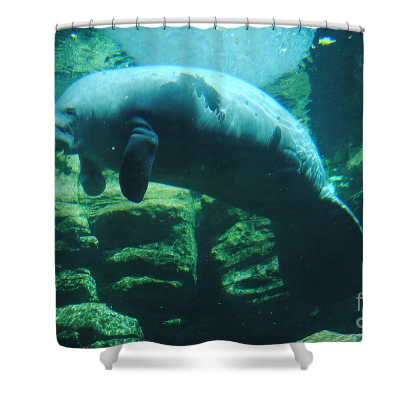 Manatee Shower Curtain featuring the photograph Manatee by Jost Houk