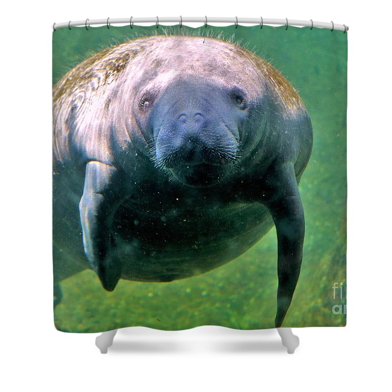 Manatee Shower Curtain Featuring The Photograph Mermaid By Diann Fisher