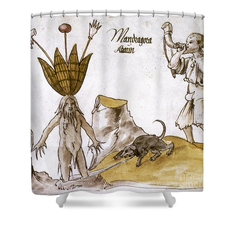 1500 Shower Curtain featuring the photograph Mandrake And Herbalist by Granger