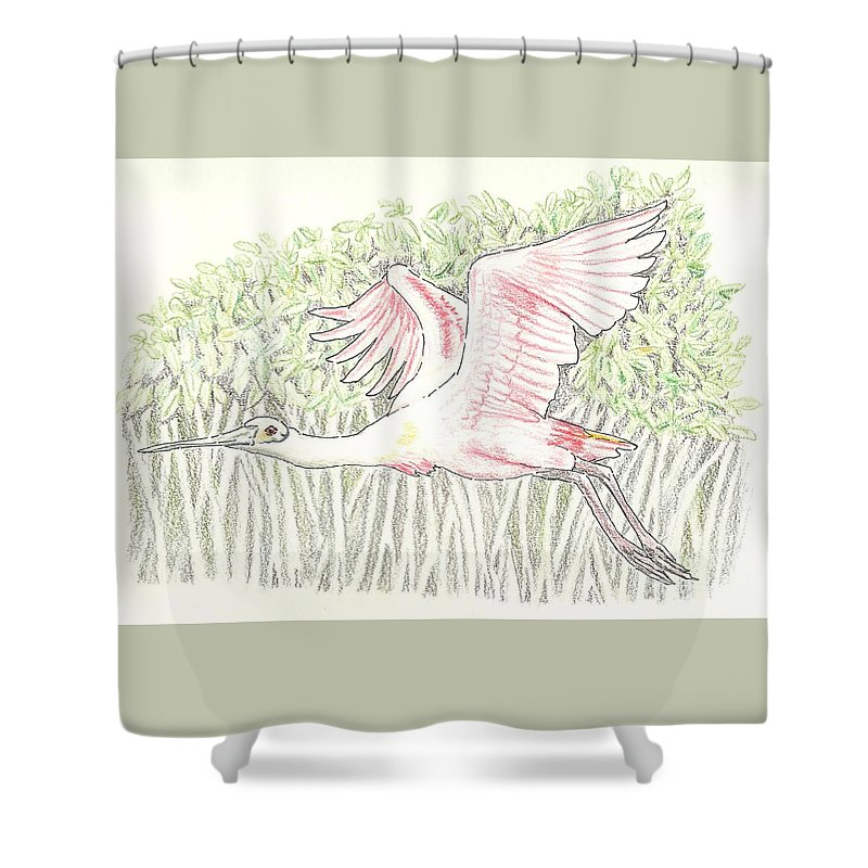 Mangrove Flyer - Pencil Without Water Shower Curtain for Sale by Sue ...