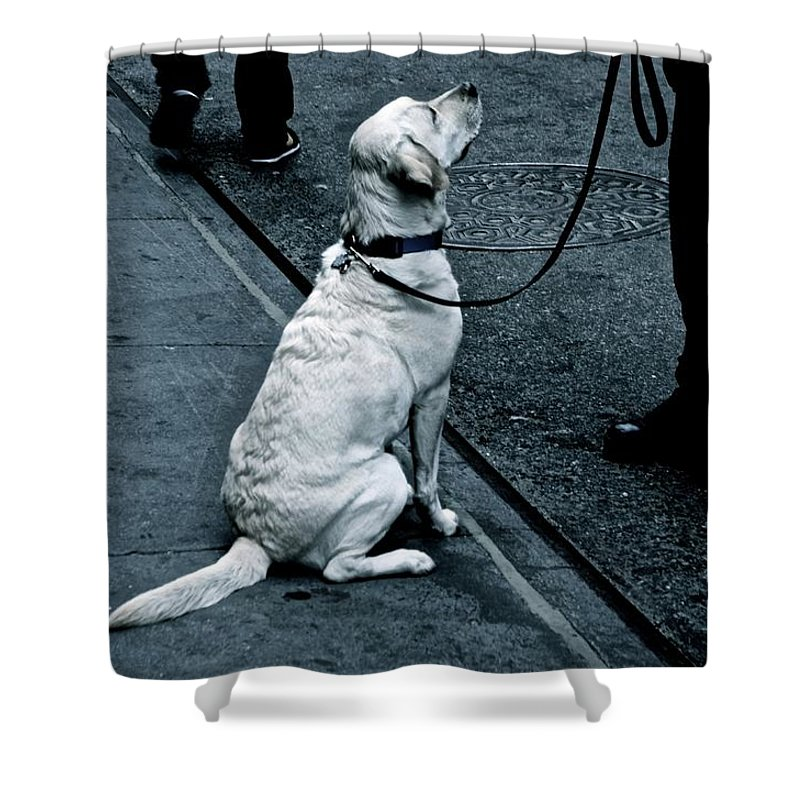 Dog Shower Curtain featuring the photograph Man's Best Investigator by Joanna Seivard