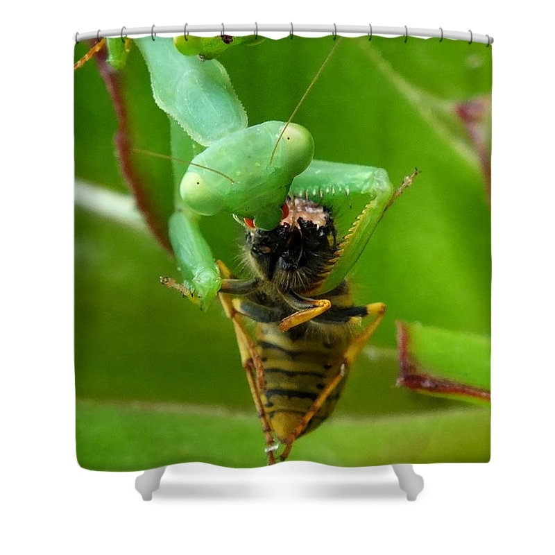 Macro Shower Curtain featuring the photograph Mantis Munchies by Guy Pettingell