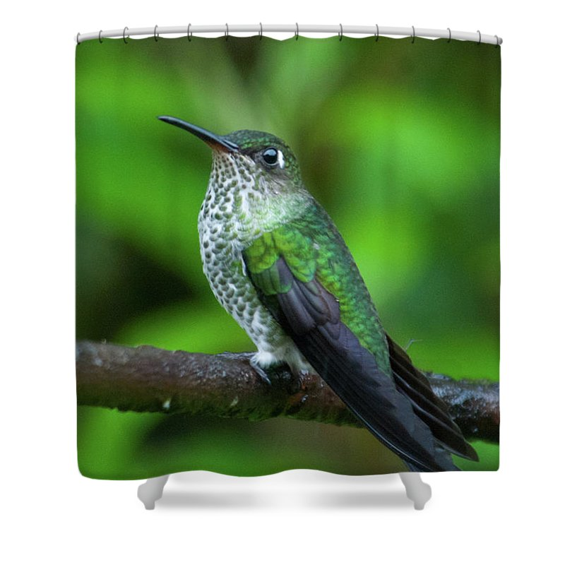 Many Spotted Hummingbird Shower Curtain Featuring The Photograph By Cascade Colors