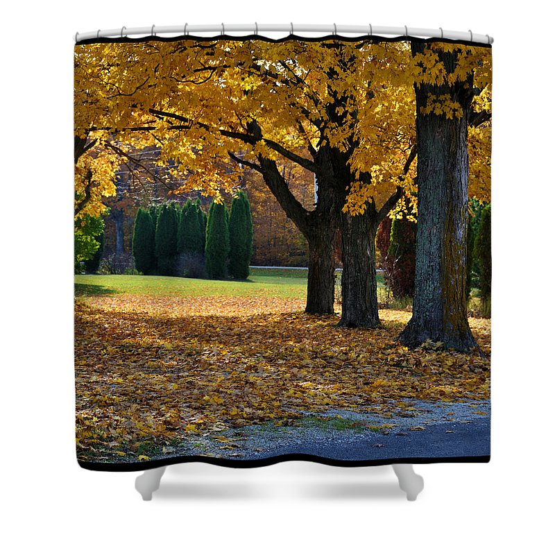 Trees Shower Curtain featuring the photograph Maple And Arborvitae by Tim Nyberg