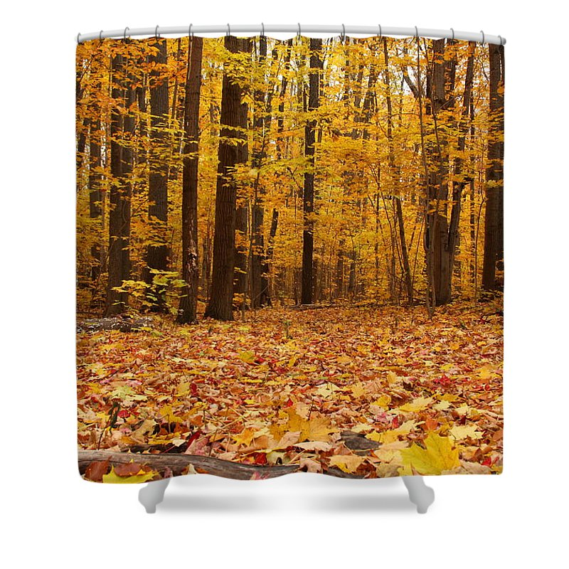 Maple Forest In Autumn Shower Curtain for Sale by Mircea Costina ...
