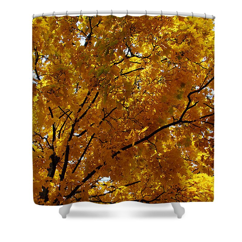 Maple Leaves Shower Curtain featuring the photograph Maple Leaves by Joanne Coyle