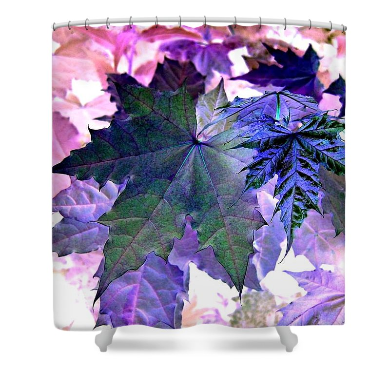 Dramatic Shower Curtain featuring the photograph Maple Magnetism by Will Borden