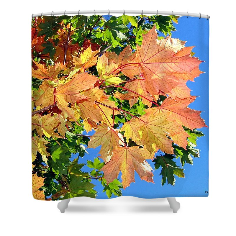 Autumn Shower Curtain featuring the photograph Maple Mania 1 by Will Borden