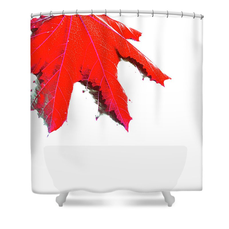Canada Shower Curtain featuring the photograph Maple by Traci Cottingham