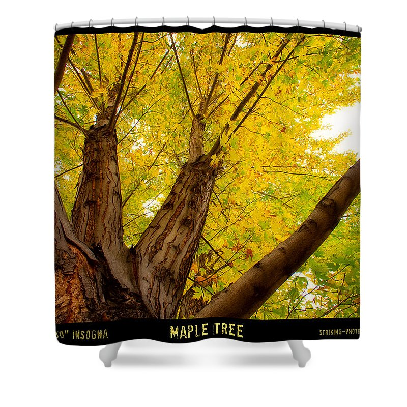 Autumns Shower Curtain featuring the photograph Maple Tree Poster by James BO Insogna