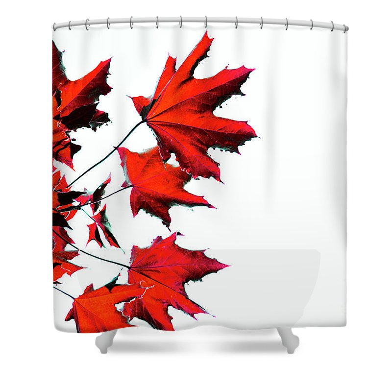 Canada Shower Curtain featuring the photograph Maple Tree by Traci Cottingham